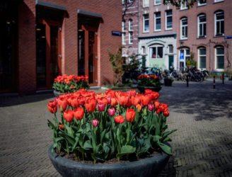 Tulpen als steun en voorjaarsgroet voor de Amsterdammer